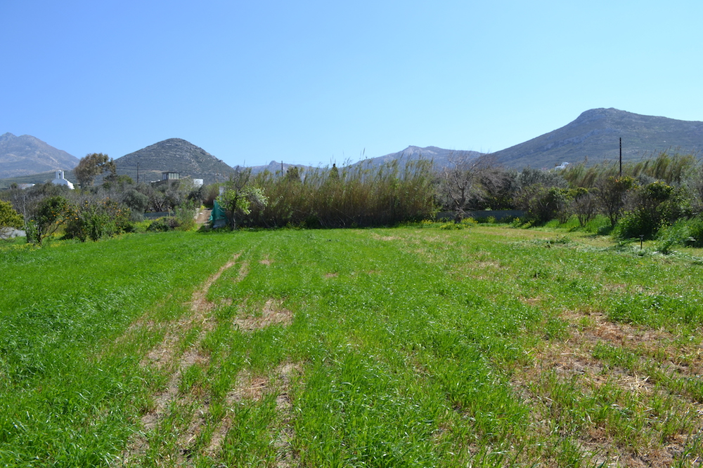For Sale Land 8000 Square Meters Engares Naxos Real Naxos