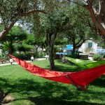 Hammocks in the garden